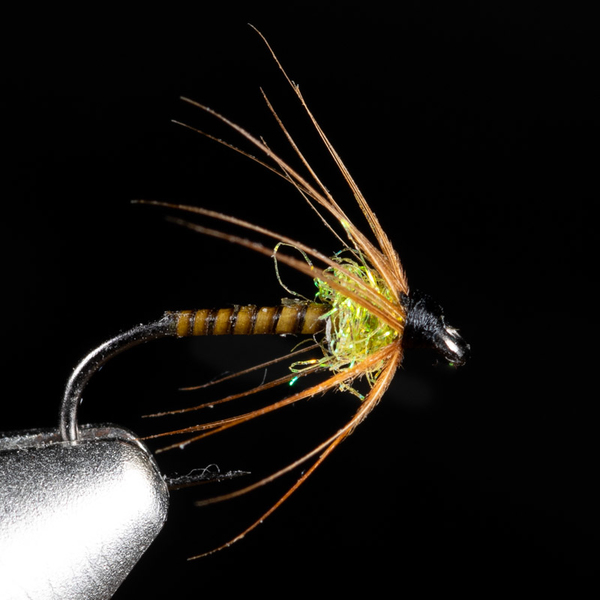 Quill Spider Golden Olive